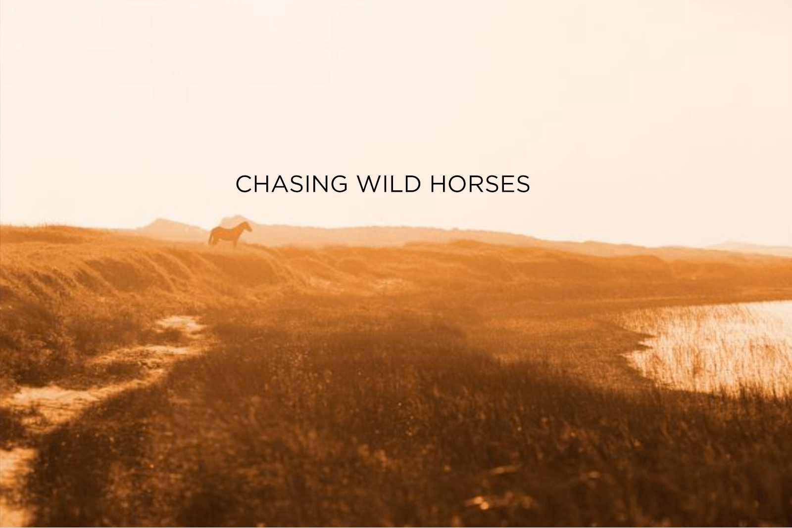 Wild Horses of Sable Island - Limited Edition Book